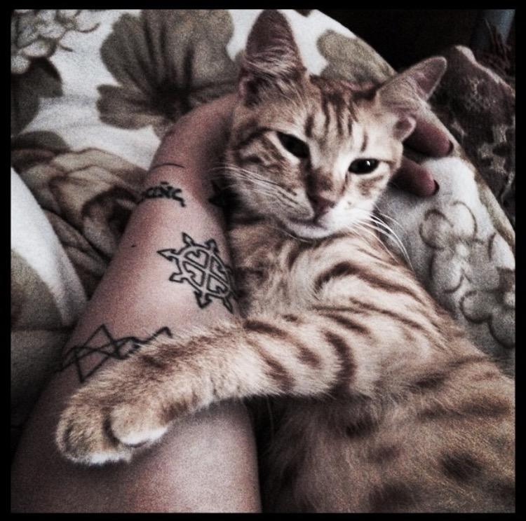 חתול כתום