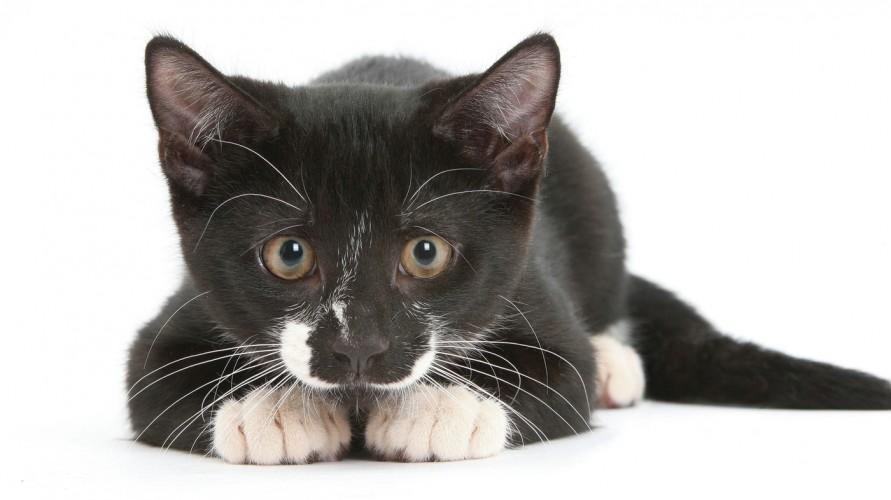 Cat Sense cover