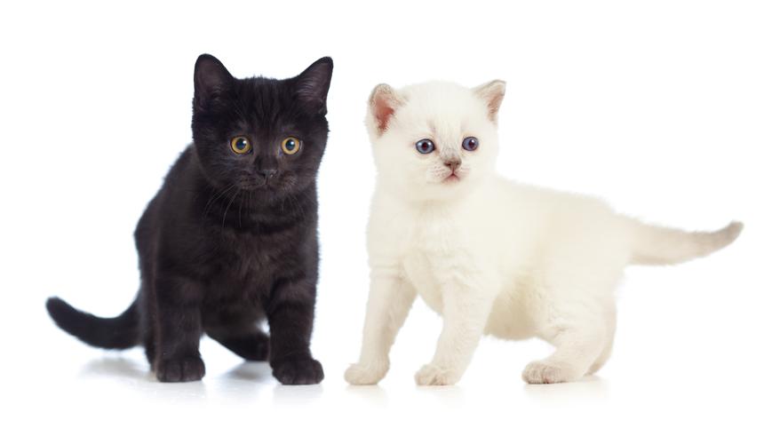 אנשים ששונאים חתולים יחזרו כעכברים בגלגול הבא