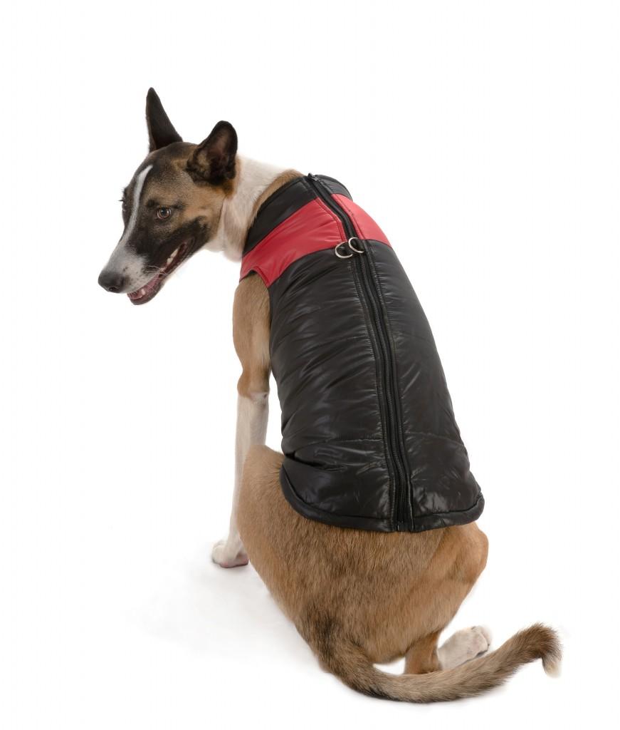 """מותג ההלבשה לכלבים ריבוס מבית ביופט / מחיר 79 ש""""ח / צילום יגאל פרדו"""
