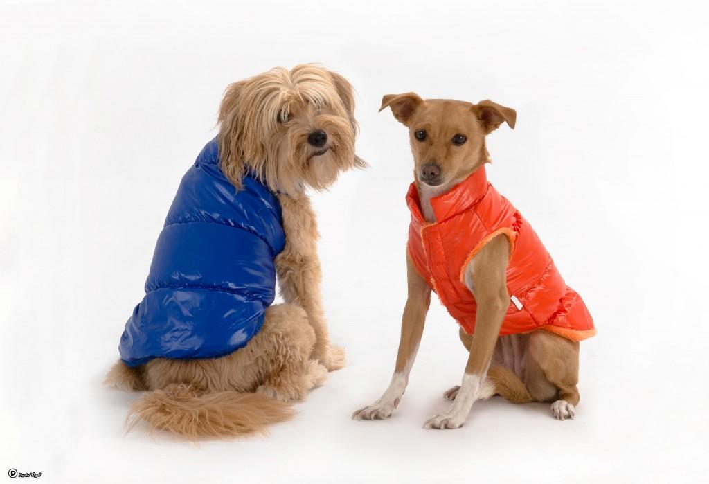 אנחנו מדגמנים את מותג ההלבשה לכלבים ריבוס מבית ביופט