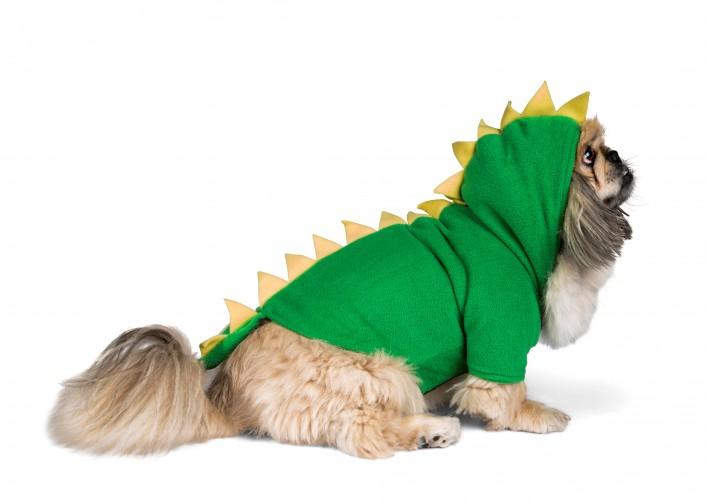 בפורים הזה הכלב שלנו יהיה כריש