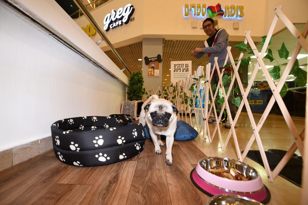 קפה גרג מציעה מתחם כלבים בסניף דיזינגוף סנטר / צלם: אלעד גוטמן